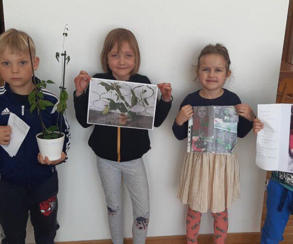 Efekty hodowli fasoli w czasie zamknięcia przedszkoli